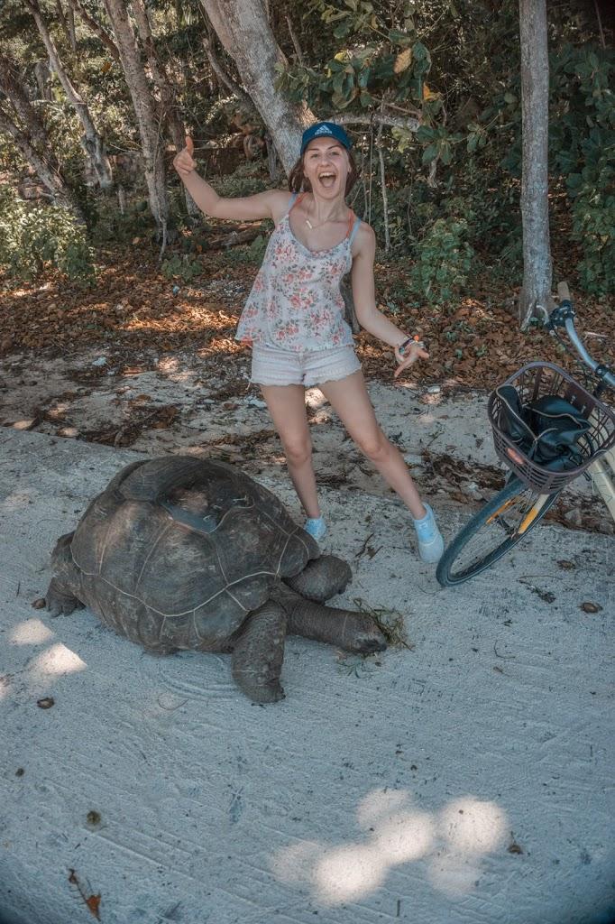 Żółw w naturalnym środowisku na Seszelach, żół gigantyczny