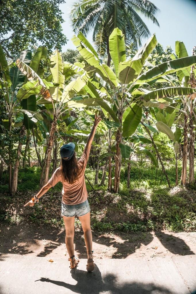 Plantacja bananów na wyspie La Digue